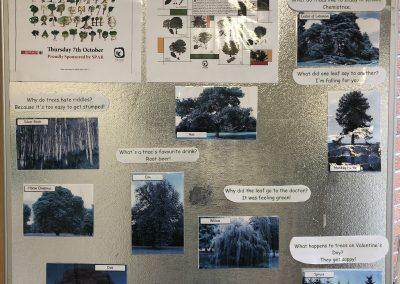National Tree Day - Display
